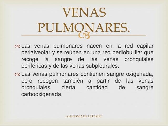 Anatomia y fisiologia del pulmon ok