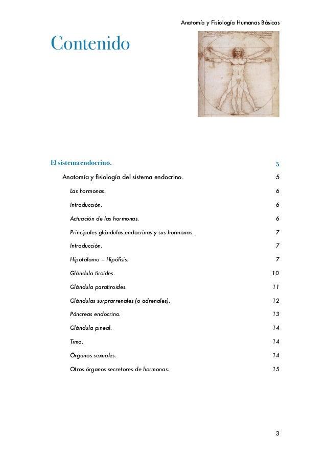 Contemporáneo Guía De La Anatomía Y La Fisiología Sistema Endocrino ...