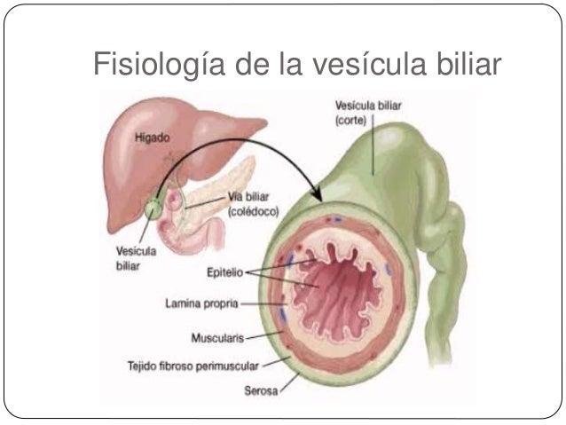 Anatomia y fisiologia del sistema epatico