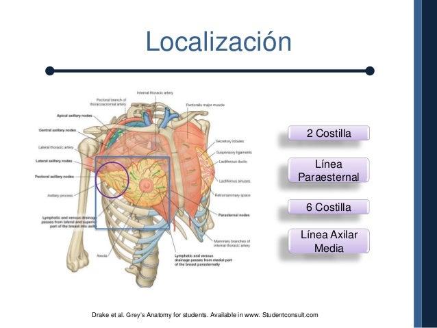 Anatomia y fisiologia de mama