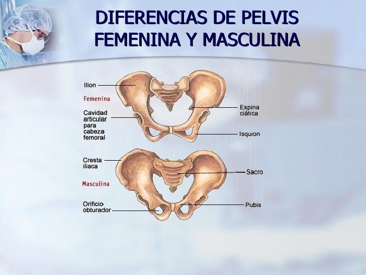 Anatomia Y Fisiologia De Organos Y Estructuras Internas