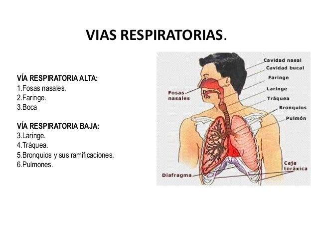 Anatomia y fisiologia de vias respiratorias