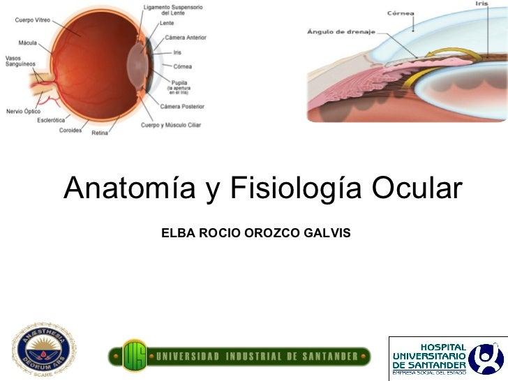 Anatomia y Fisiologia Ocular OftalmoanestesiaUIS