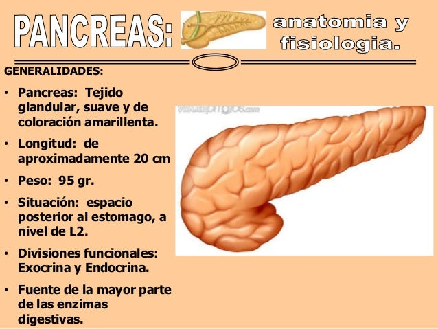 Anatomia y fisiologia pancreatica
