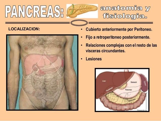 Anatomia y fisiologia pancreatica