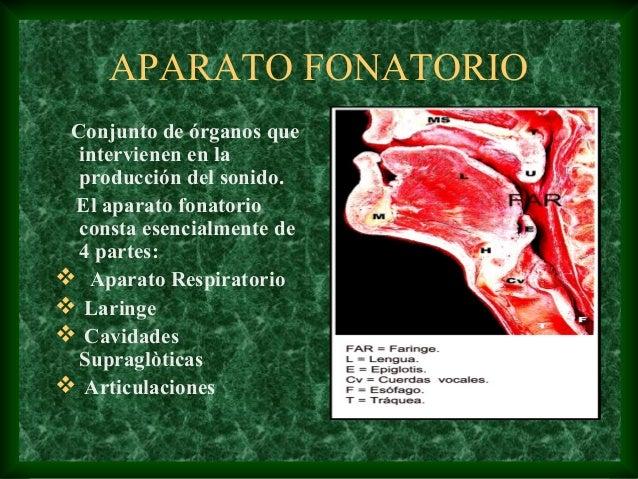 Anatomía y Fisiología del Aparato Fonatorio y Respiratorio
