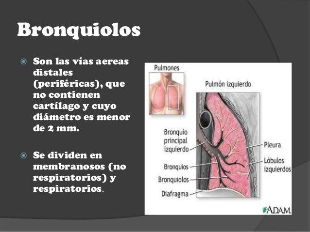Anatomia y fisiologia pulmonar ok