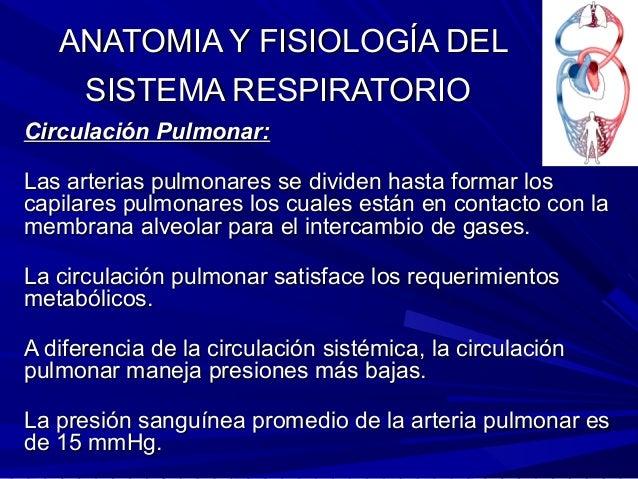 Anatomia y fisiologia respiratoria 1