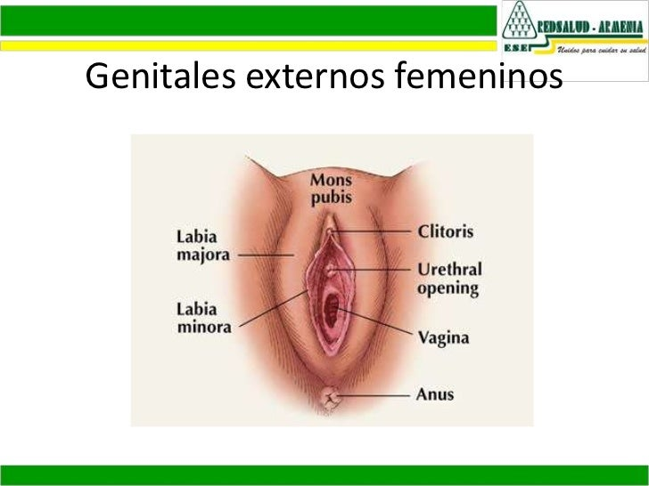 Anatomia y fisiologia sistema reproductor