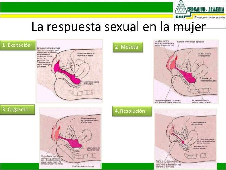 Perfecto Anatomía De La Relación Sexual Molde - Anatomía de Las ...