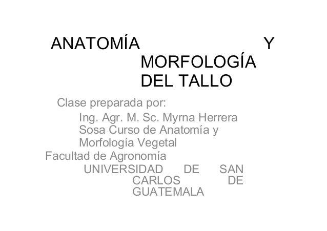 ANATOMÍA YMORFOLOGÍADEL TALLOClase preparada por:Ing. Agr. M. Sc. Myrna HerreraSosa Curso de Anatomía yMorfología VegetalF...