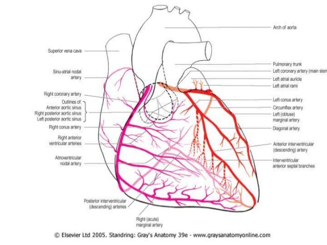 Anatomical Basis Of Coronary Intervention