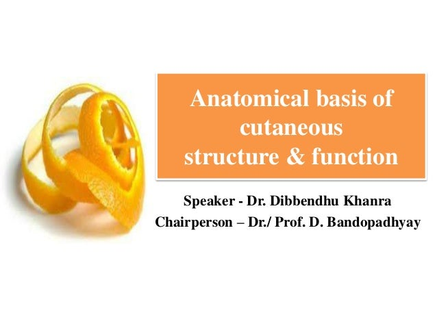 Anatomical basis of cutaneous structure & function Speaker - Dr. Dibbendhu Khanra Chairperson – Dr./ Prof. D. Bandopadhyay