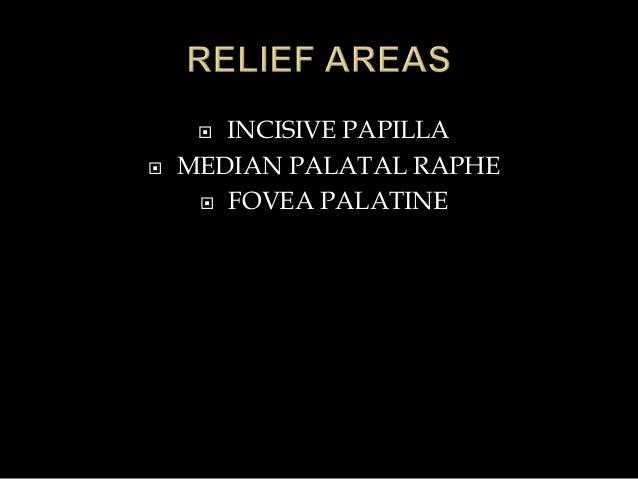  INCISIVE PAPILLA  MEDIAN PALATAL RAPHE  FOVEA PALATINE