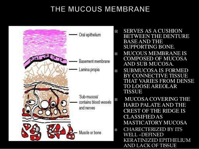  SERVES AS A CUSHION BETWEEN THE DENTURE BASE AND THE SUPPORTING BONE.  MUCOUS MEMBRANE IS COMPOSED OF MUCOSA AND SUB MU...