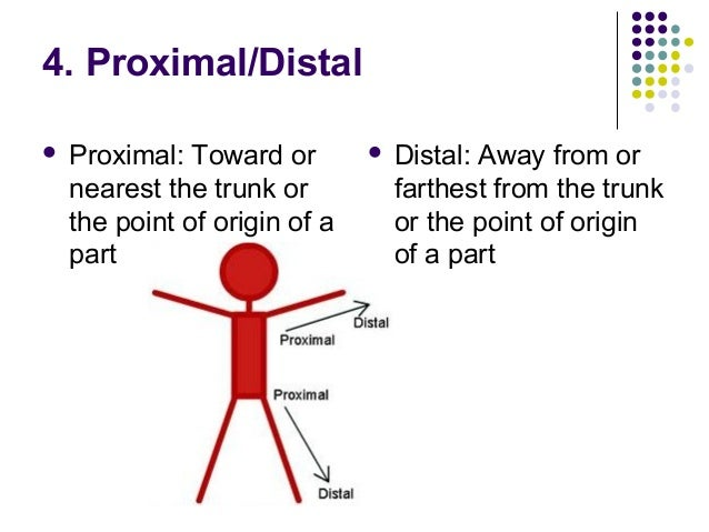 Anatomical position.ppt (1)