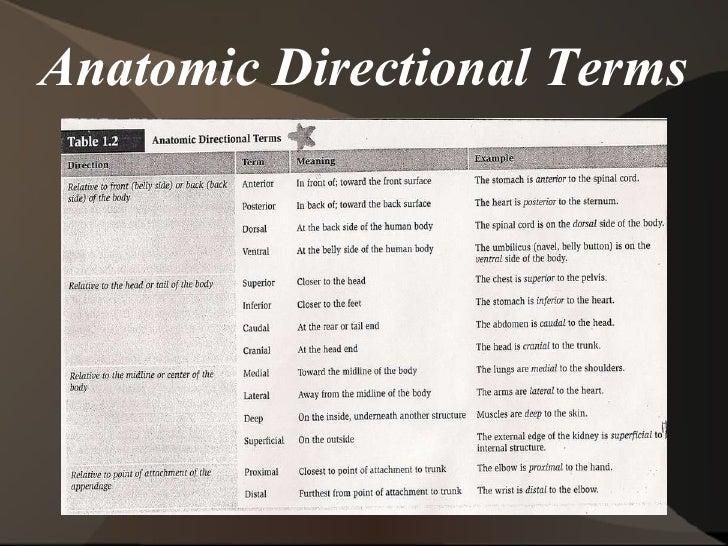 Anatomy terminology list