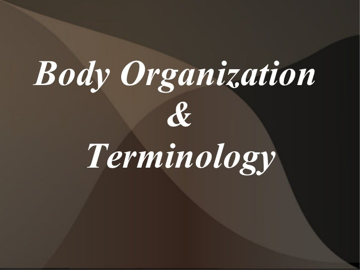 Body Organization       &  Terminology