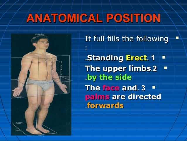 ANATOMICAL POSITIONANATOMICAL POSITION It full fills the followingIt full fills the following :: 11..StandingStanding Er...