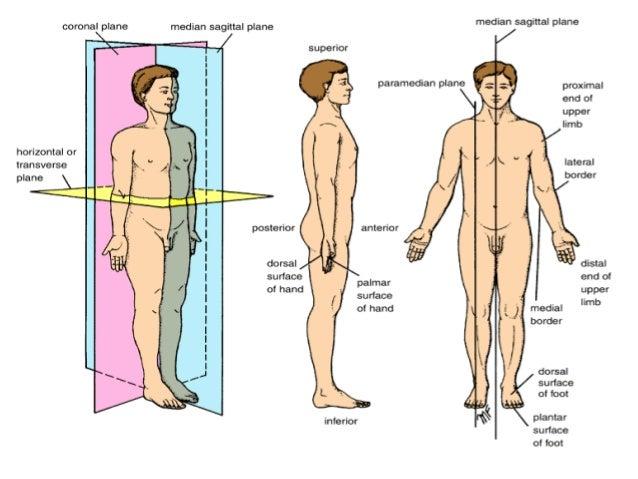 Anatomical Terminology