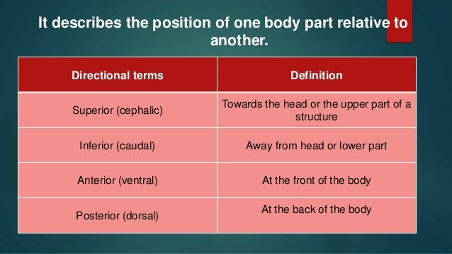 Anatomical Terms Directional Terms