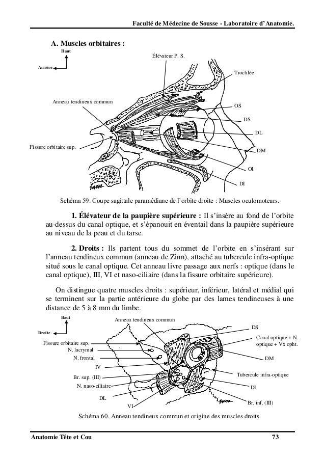 tete et cou anatomie pdf