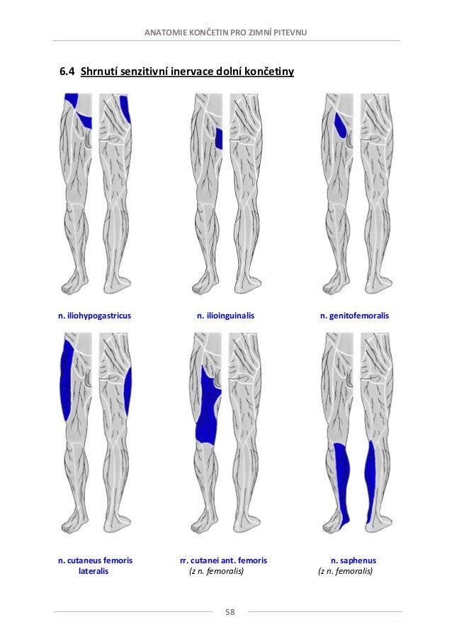 Anatomie 3.lf
