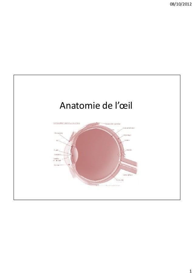 08/10/2012Anatomie de l'œil                            1