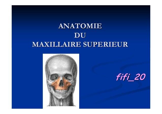 ANATOMIEANATOMIE DUDU MAXILLAIRE SUPERIEURMAXILLAIRE SUPERIEUR fifi_20fifi_20