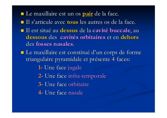 Anatomie du maxillaire Slide 2