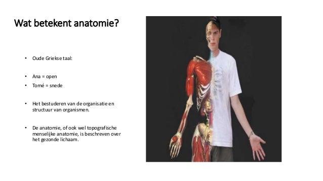Niedlich Wat Is Anatomie Ideen - Anatomie Von Menschlichen ...