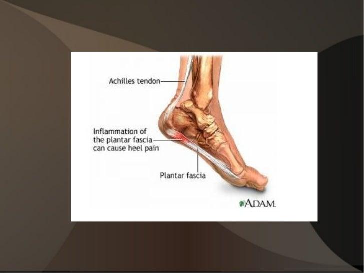 Anatomie Du Pied 3D anatomie pour le mouvement