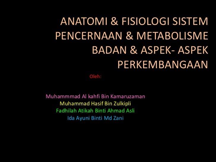 Fungsi Pankreas Dalam Pencernaan Dan Metabolisme Gula
