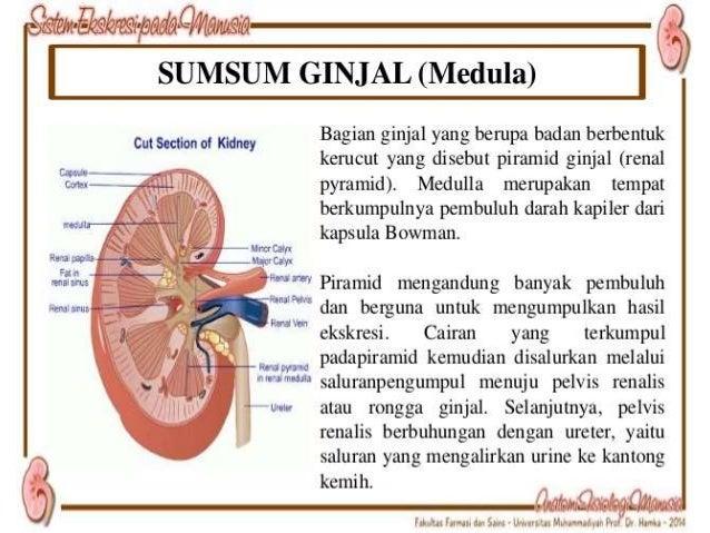 NEFRON • Unit fungsional ginjal.(±1 juta nefron 1 ginjal) • Bertanggung jawab dlm pembentukan urine. • Strukture nephrone ...