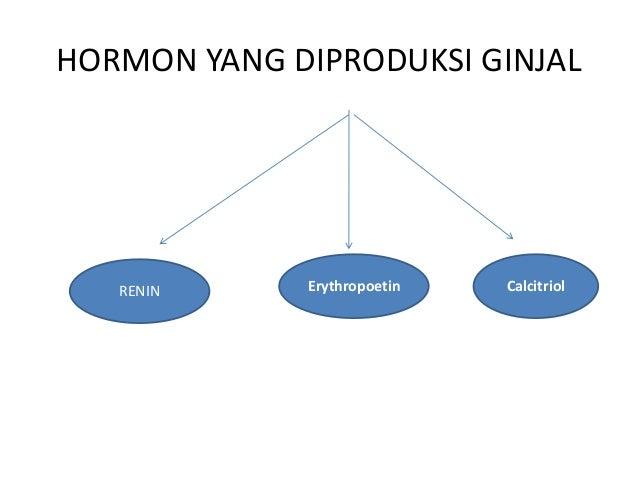 LAJU FILTRASI GLOMERULUS (LFG) Filtrasi Ginjal (Glomerular Filtration Rate,GFR) adalah jumlah filtrat ginjal yang terbentu...