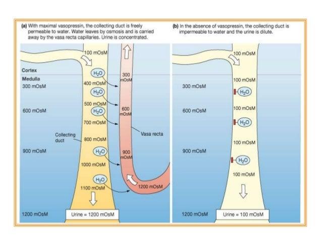 Palpasi Aorta • Tekanlah kuat-kuat abdomen bagian atas, sedikit di sebelah kiri garis tengah, dan rasakan adanya pulsasi a...
