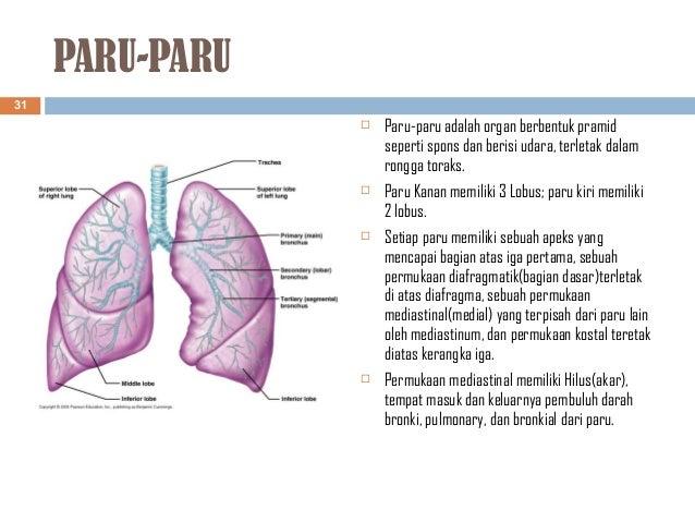 Anatomi Fisiologi Sistem Pernafasan Tm1
