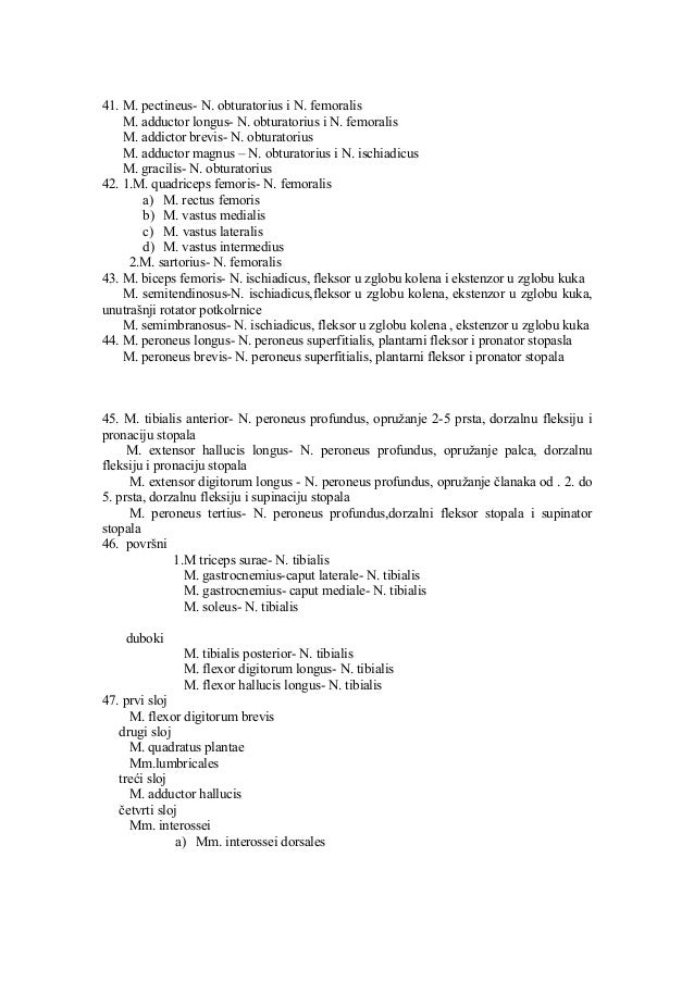 41. M. pectineus- N. obturatorius i N. femoralis M. adductor longus- N. obturatorius i N. femoralis M. addictor brevis- N....