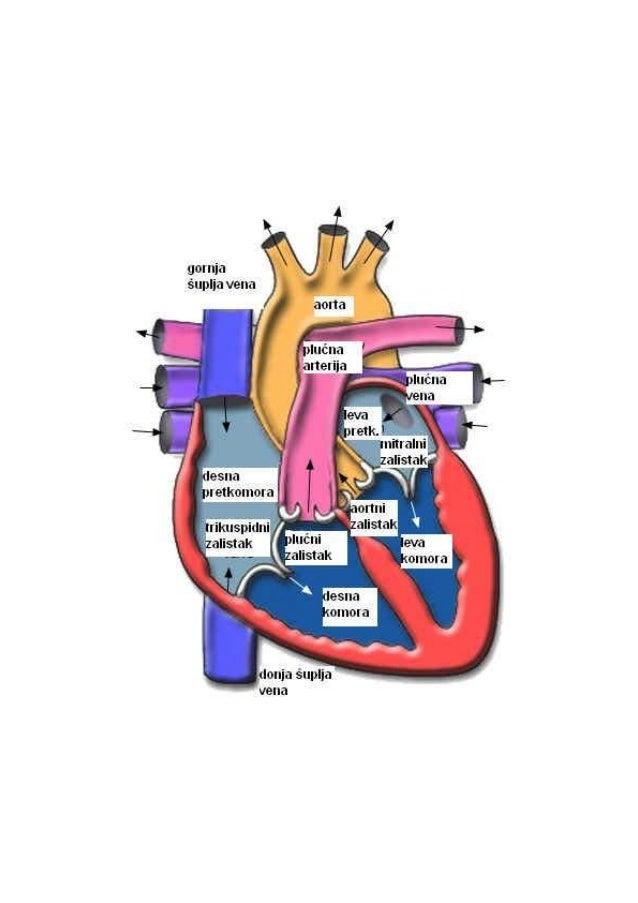 Anatomija mali atlas