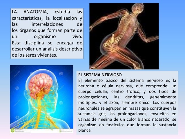 Anatomina y sistema nervioso