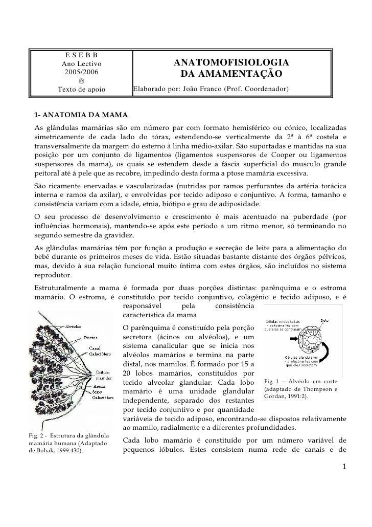 ESEBB            Ano Lectivo                          ANATOMOFISIOLOGIA             2005/2006                            D...