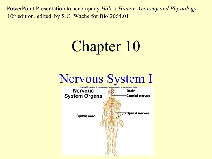 Chapter 10 Nervous System I PowerPoint Presentation to accompany  Hole's Human Anatomy and Physiology,  10 th  edition ,  ...