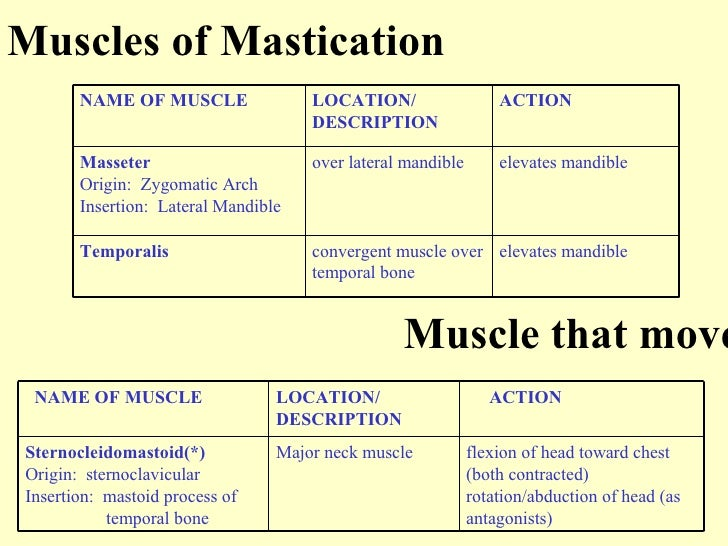 muscle that mov... Frontalis Muscle Origin Insertion Action