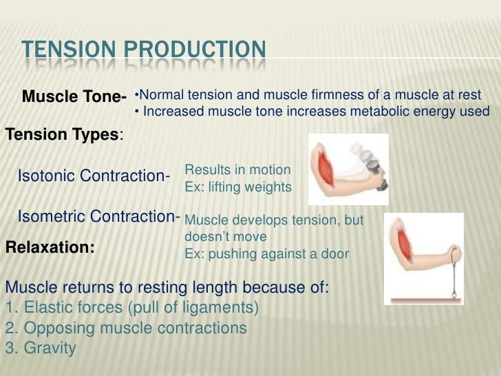 Muscle Tone Definition Anatomy