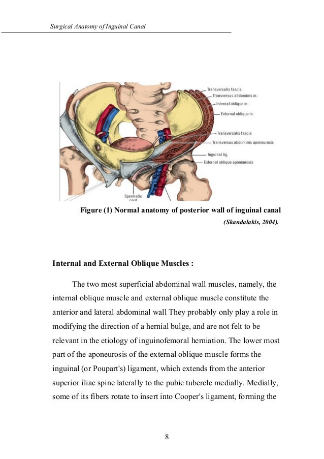 surgical-anatomy-of-inguinal-canal-3-638.jpg?cb=1473354441