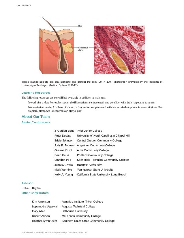 Berühmt Anatomy And Physiology Community College Ideen - Anatomie ...