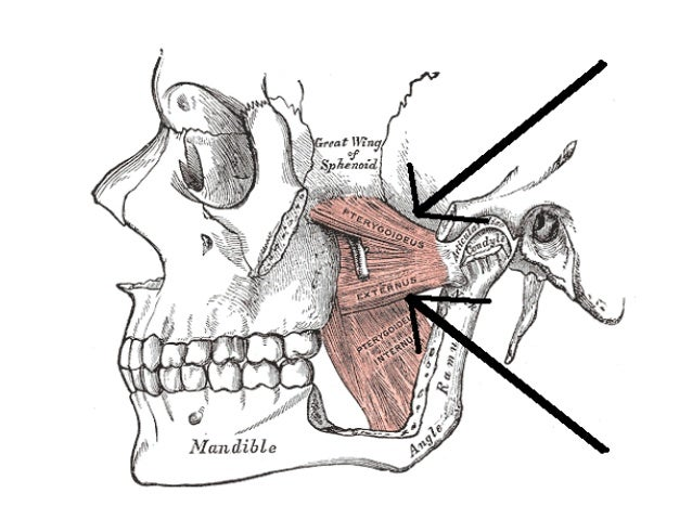 Anatomy And Fractures Of The Mandible