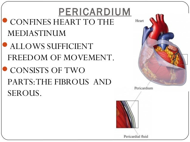 Anatomy and-physiology-of-the-cardiovascular-system-medical-surgical-…