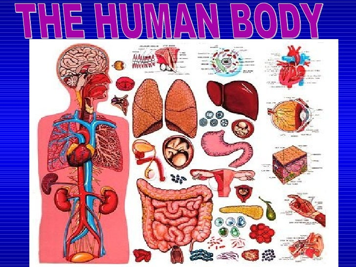 The Human Body Diagram 728 The Human Body Diagram - Wiring Diagram Post
