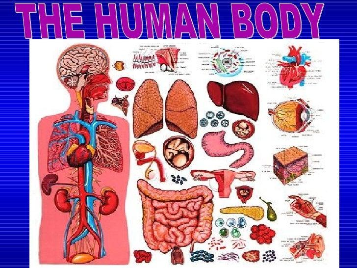 The Human Body Diagram 728 The Human Body Diagram - Wiring Diagram Post